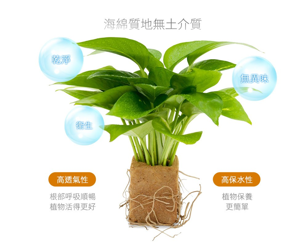 2Ustyle 風格圖悠 海綿質地無土介質 乾淨 衛生 無異味 根部呼吸順暢 植物保養簡單 易植棉