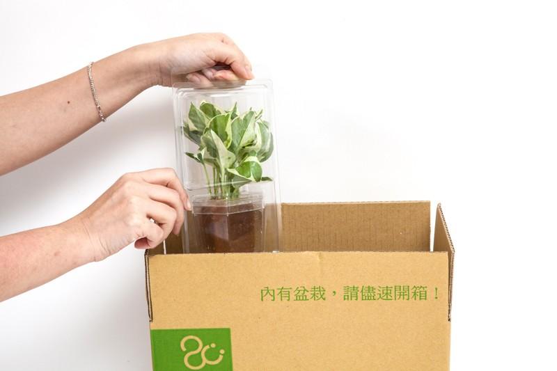 2Ustyle首創植栽遞送專用外箱