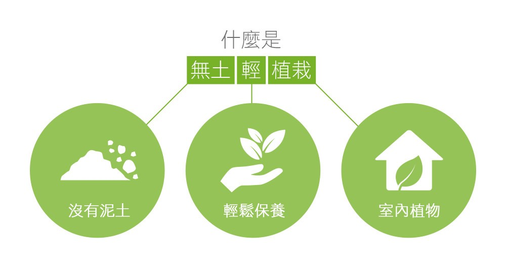 2Ustyle 風格圖悠 無土輕植栽 沒有泥土 輕鬆保養 室內植物 無土植物 好照顧植物 好養植物 易植棉