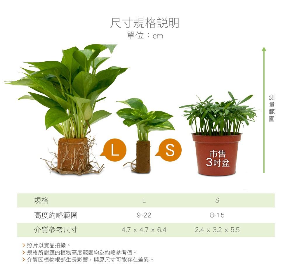 2Ustyle 風格圖悠 無土輕植栽 尺寸規格說明