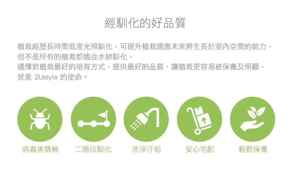 2Ustyle 風格圖悠 好品質 低度光照馴化 病蟲害篩檢 二階段馴化 洗淨汙垢 安心宅配 輕鬆保養