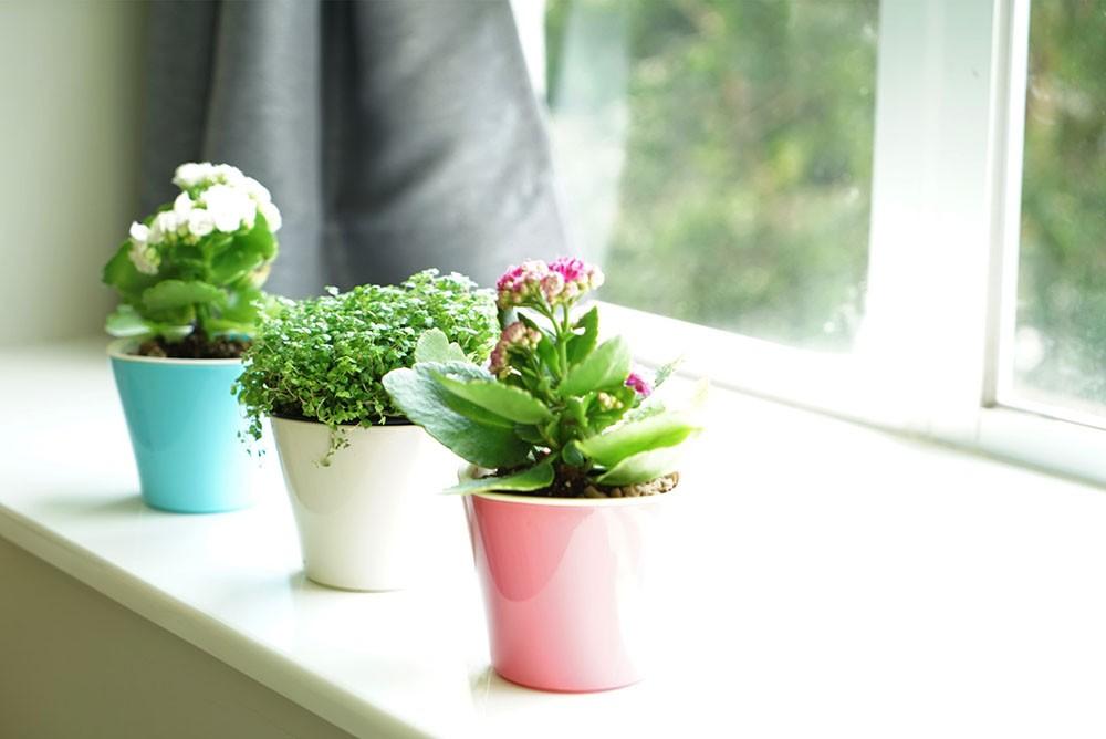 小盆栽、小品盆栽