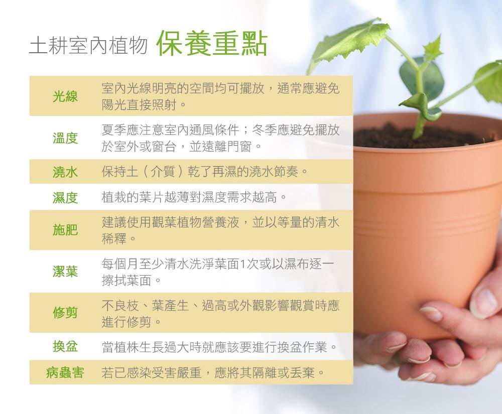 2Ustyle 風格圖悠 盆栽 植物 花盆器 土耕 觀葉