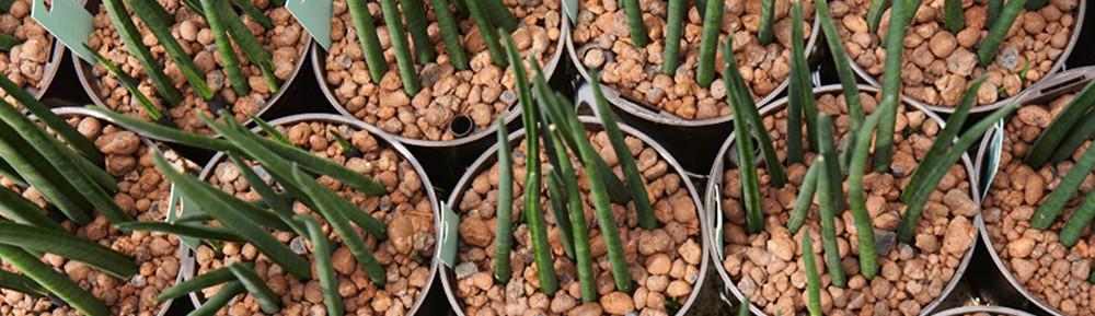 2Ustyle 風格圖悠 花盆 花器 植物 盆栽 荷蘭 Jongkind 發泡煉石 水耕介質