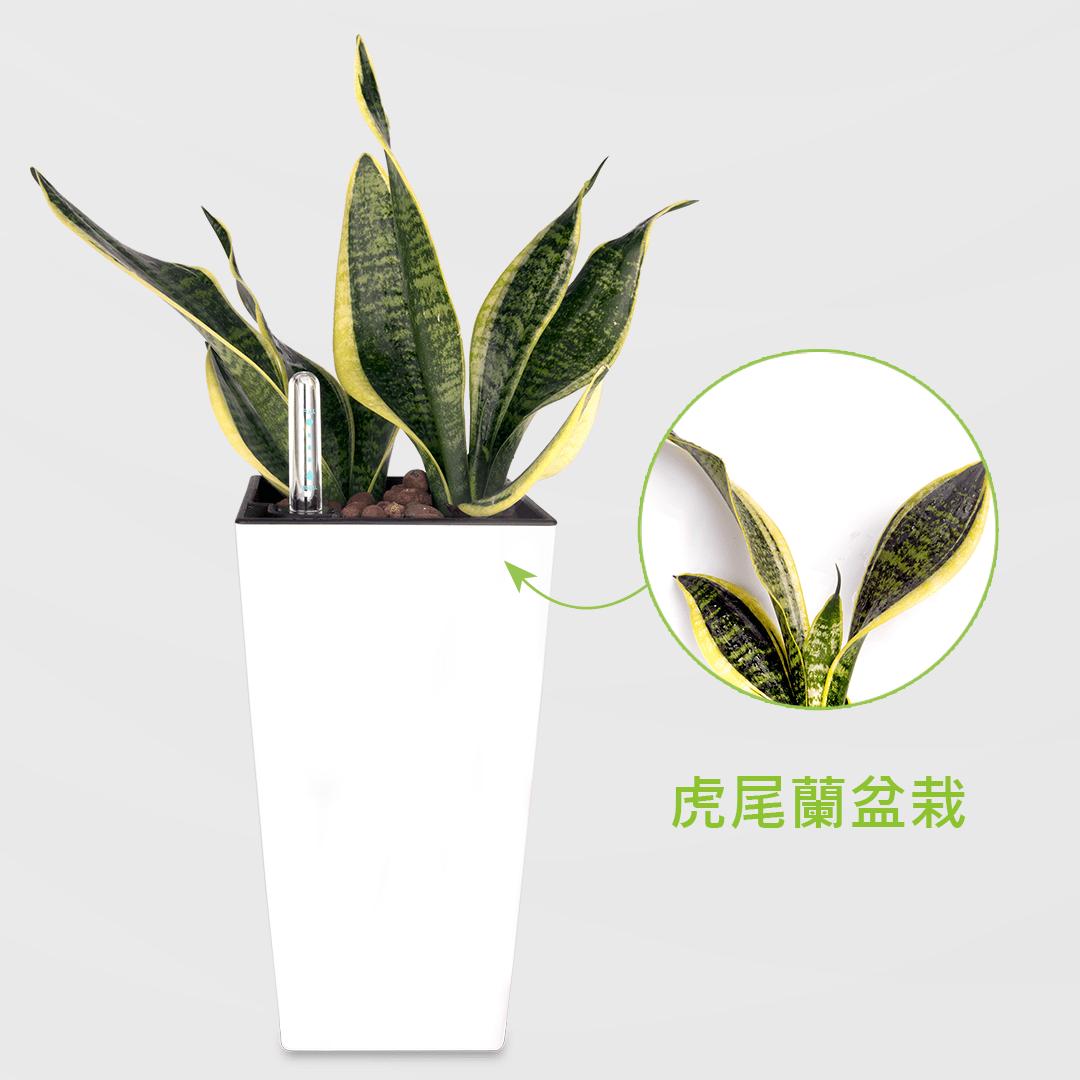 虎尾蘭盆栽 2Ustyle 風格圖悠 盆栽 花器 植物