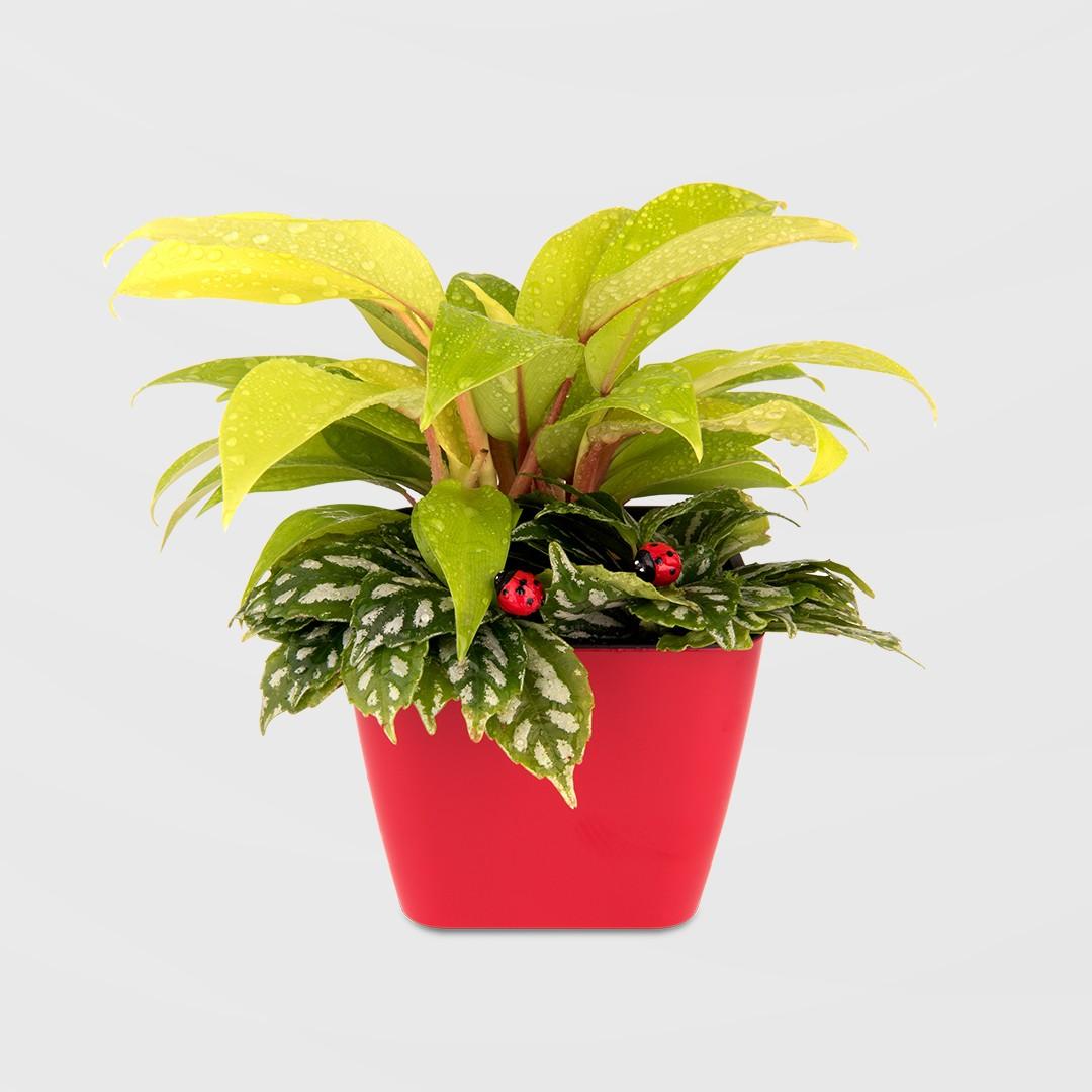 2Ustyle 風格圖悠 盆栽 花器 植物 盆栽飾品