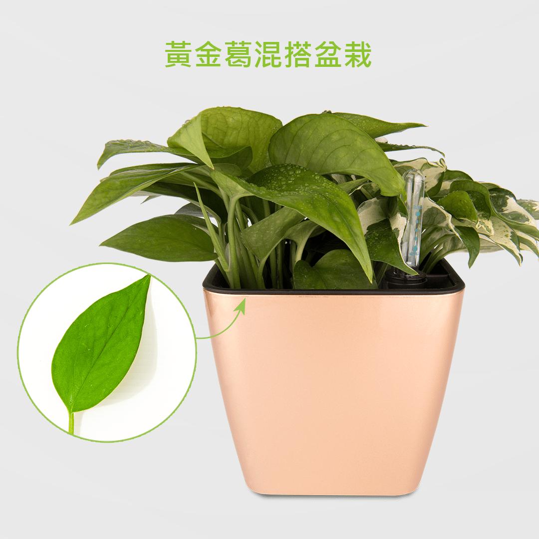 黃金葛盆栽 2Ustyle 風格圖悠 盆栽 花器 植物