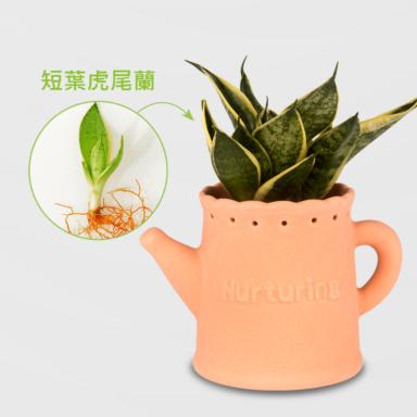 虎尾蘭盆栽_配水壼素陶