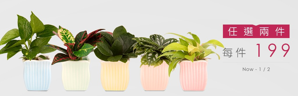 2Ustyle 風格圖悠 盆栽 花器 植物